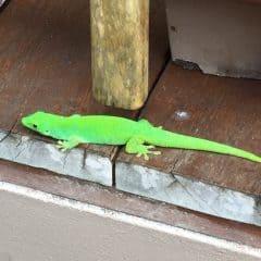 La Buse Restaurant – Green Gecko