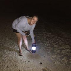 Anse Kerlan Beach Chalets – Turtle on the Beach