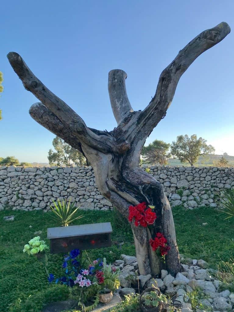 A tree that looks a bit like Jesus on the cross. Jesus Tree of Mdina