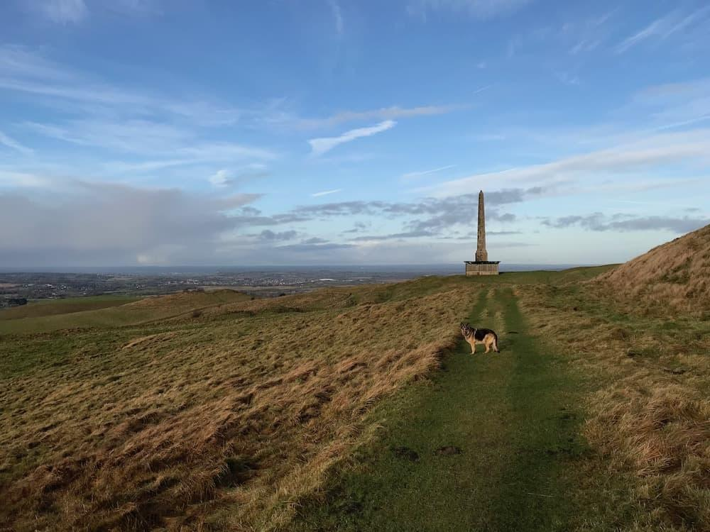 Amber the Alsatian in front of the Lansdowne Monument