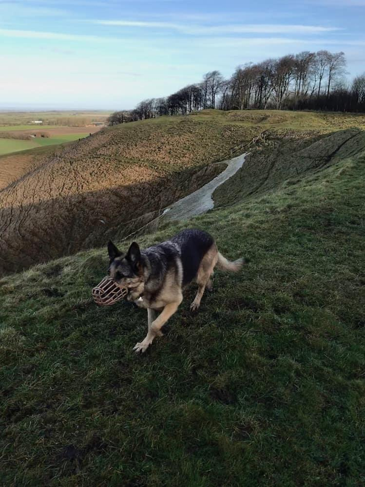 Amber in front of the Cherhill White Horse
