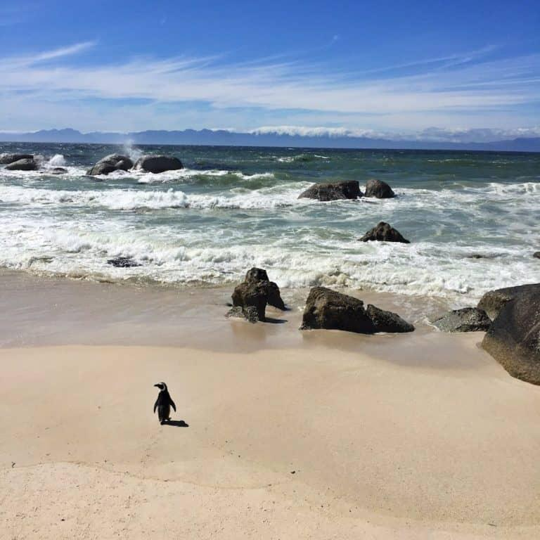 Cape Town Penguins: Stony Point or Boulders Beach?