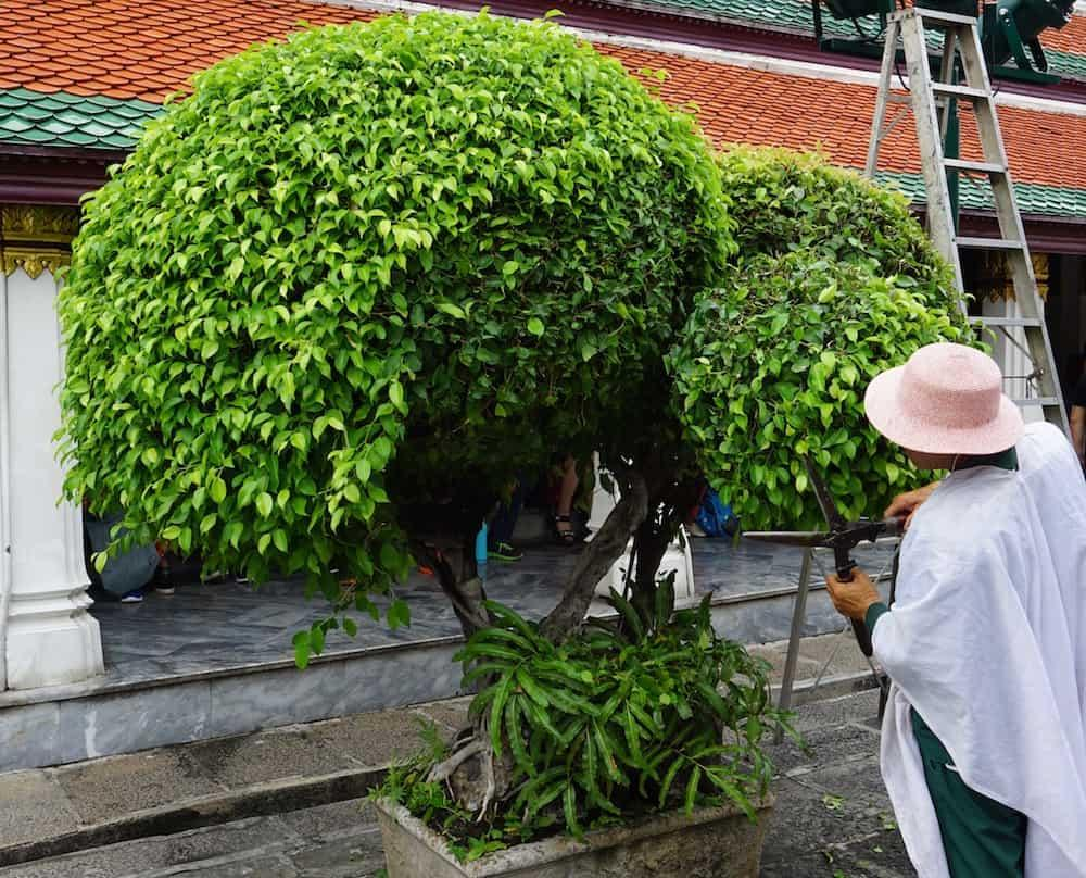 Trimming topiary at the Grand Palace, Bangkok