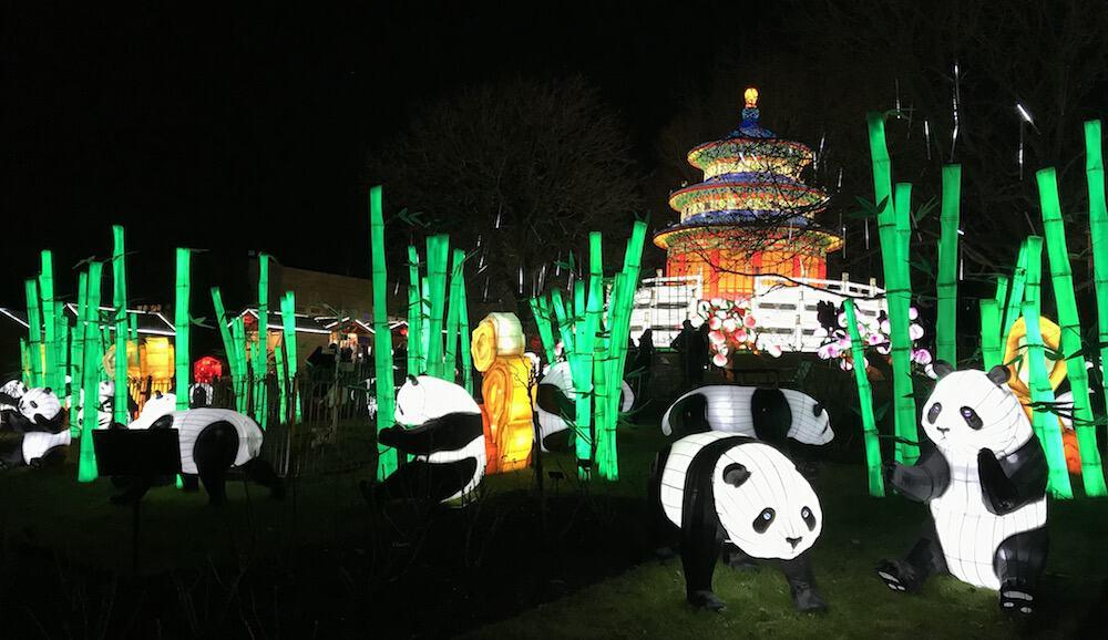 Giant Lanterns of China at Edinburgh Zoo - Pandas amongst bamboo