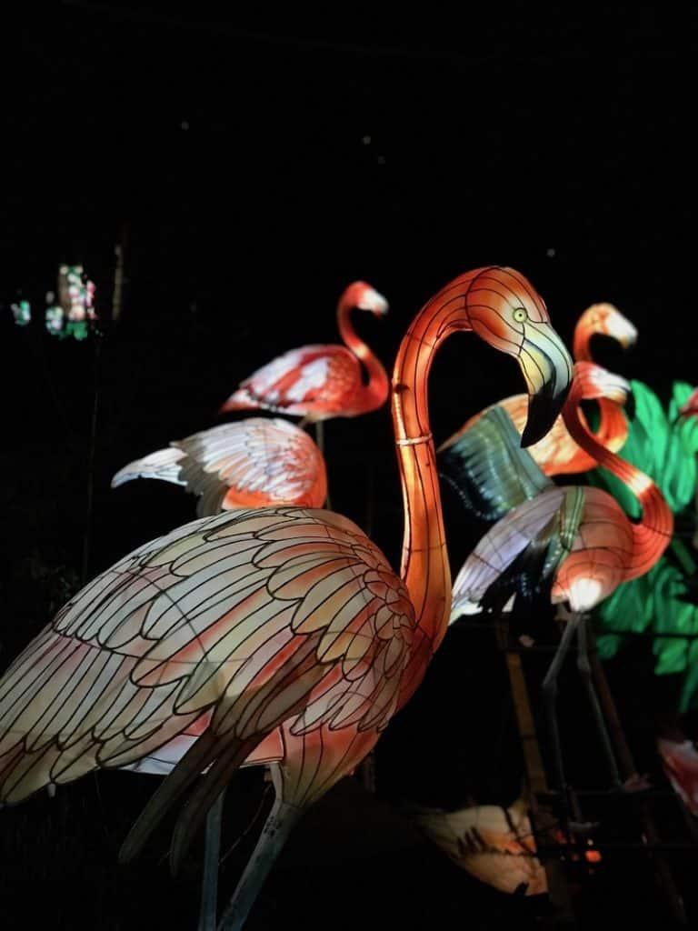 Giant Lanterns of China at Edinburgh Zoo - Close up flamingo
