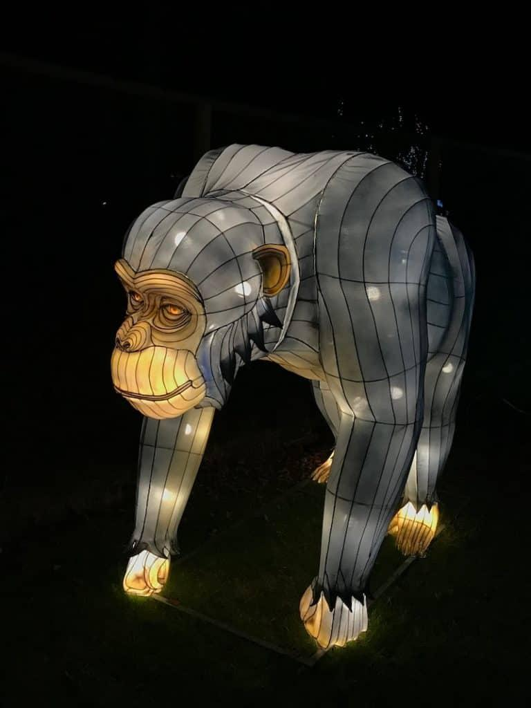 Giant Lanterns of China at Edinburgh Zoo - Chimpanzee