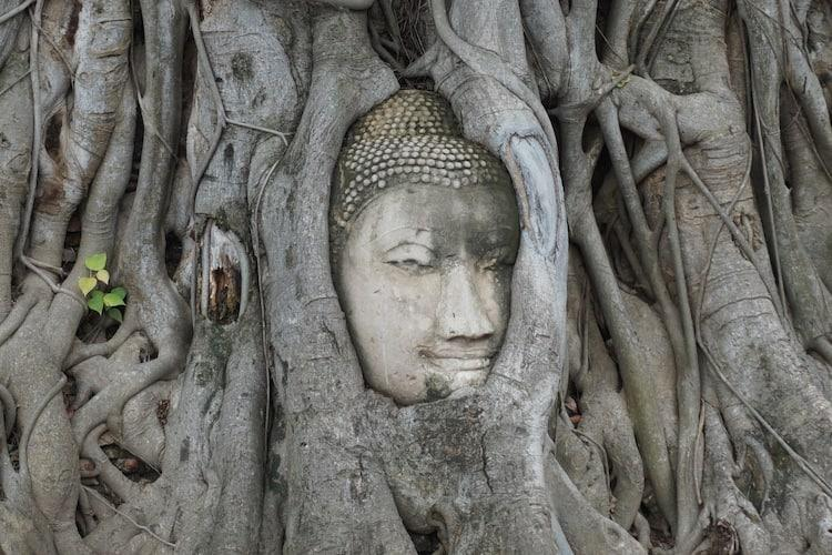 Ayutthaya Day Trip - Wat Maha That