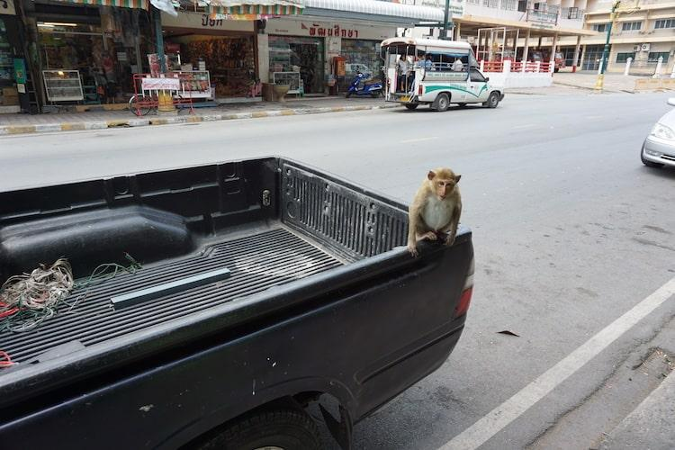 Lopburi, Monkey Town