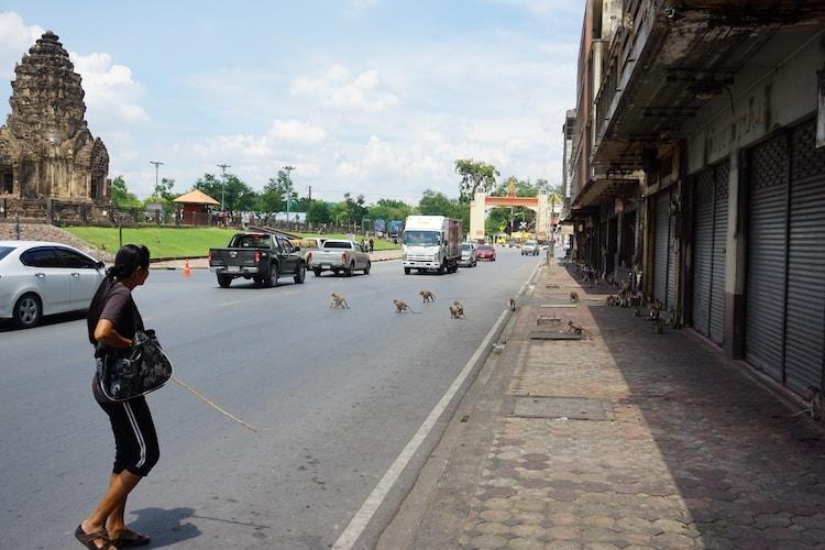 Monkey Crossing, Lopburi