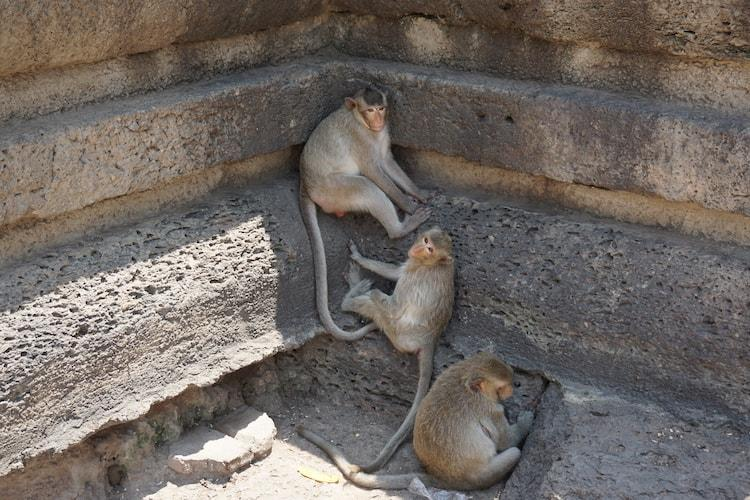Monkeys at Lopburi Temple