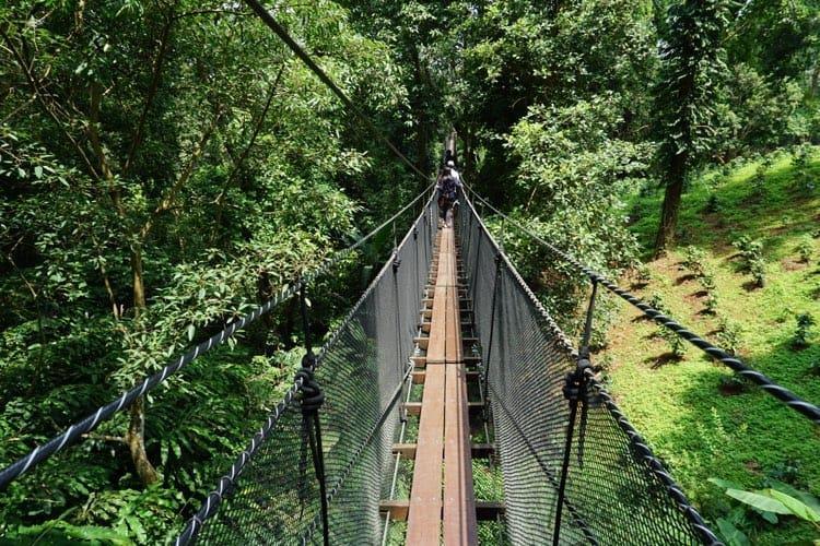Walking Through the Treetops at Mae Fah Luang Gardens