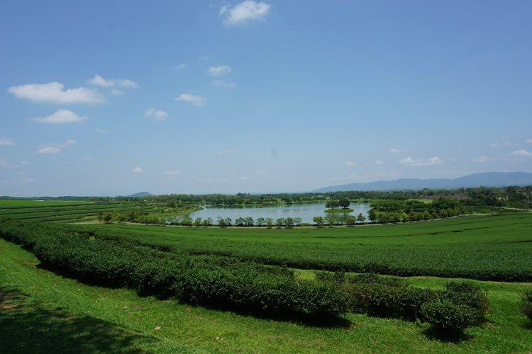 A blue sky with green fields at Singha Park in Chiang Rai province.