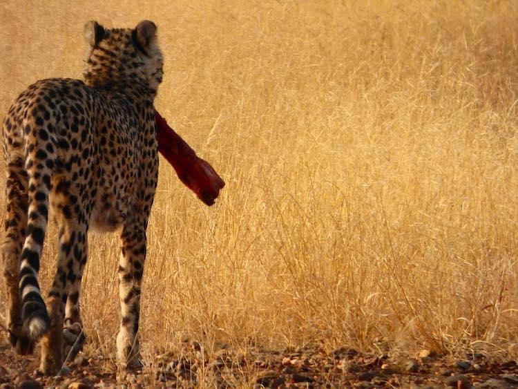 3 Month Sabbatical Idea - Overland African Safari