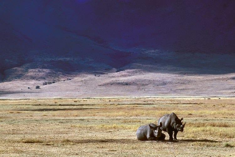 Two rhinos on yellow grass with mountains behind them