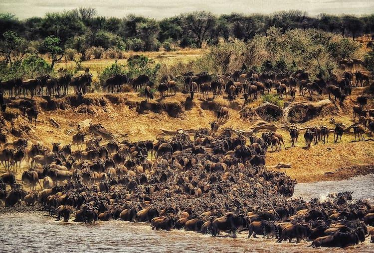 Best Places for Safari - Maasai Mara