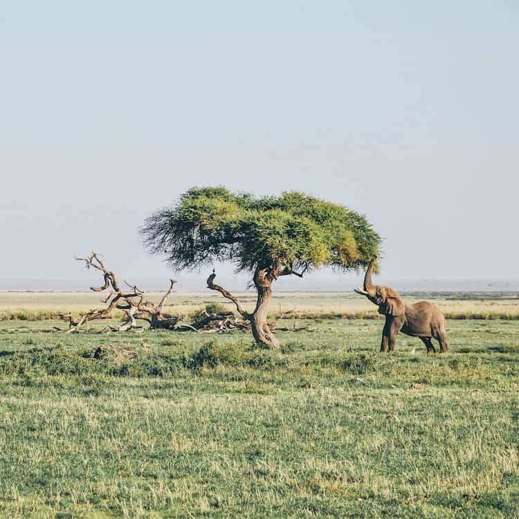 Where To Go On Safari In Africa | 4 Countries To Consider