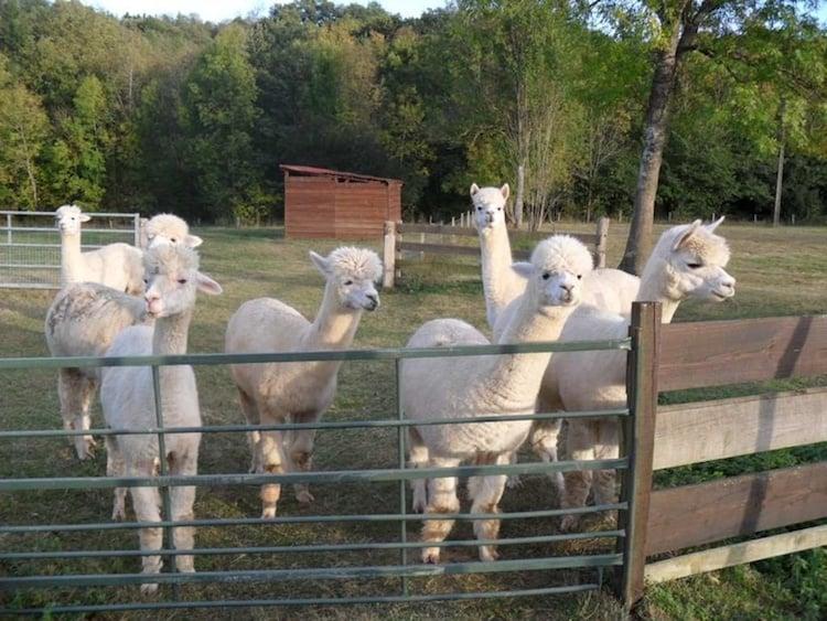 Three Month Sabbatical Ideas | Housesitting in Rural France