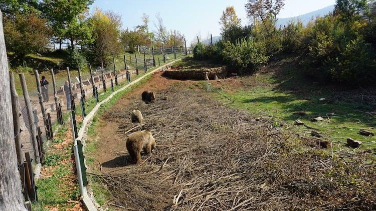 Croatia Road Trip - Kuterevo Bear Sanctuary