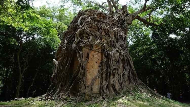 Building engulfed by a tree at Sambor Prei Kuk