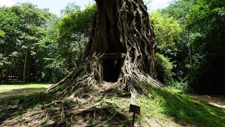 A temple enclosed by a huge tree showing a dark doorway at Sambor Prei Kuk, Cambodia.