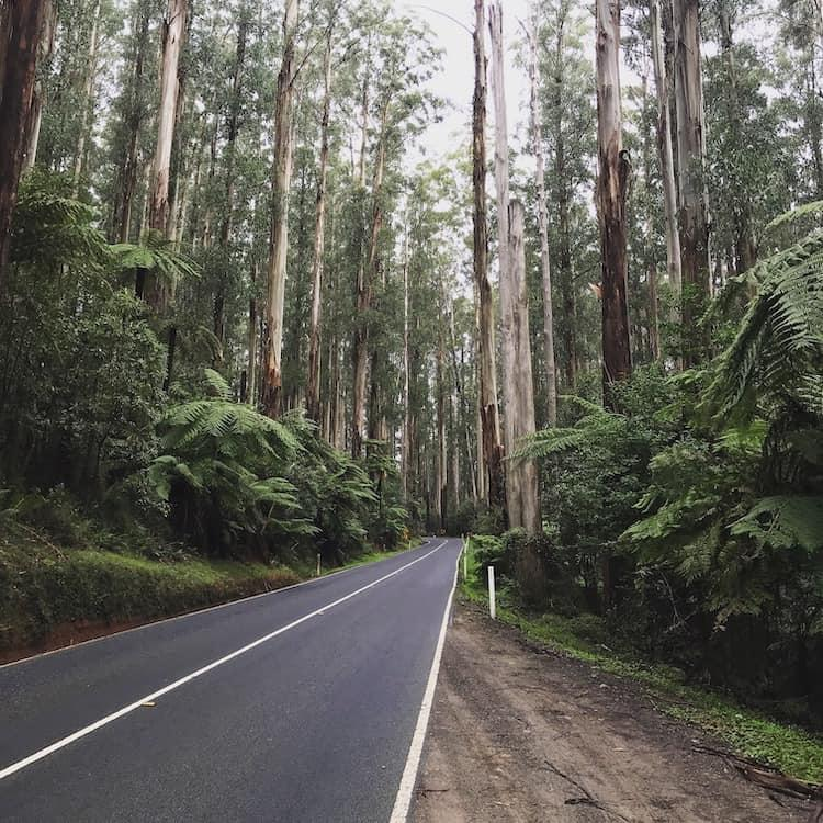What to do in Healesville, Black Spur Drive
