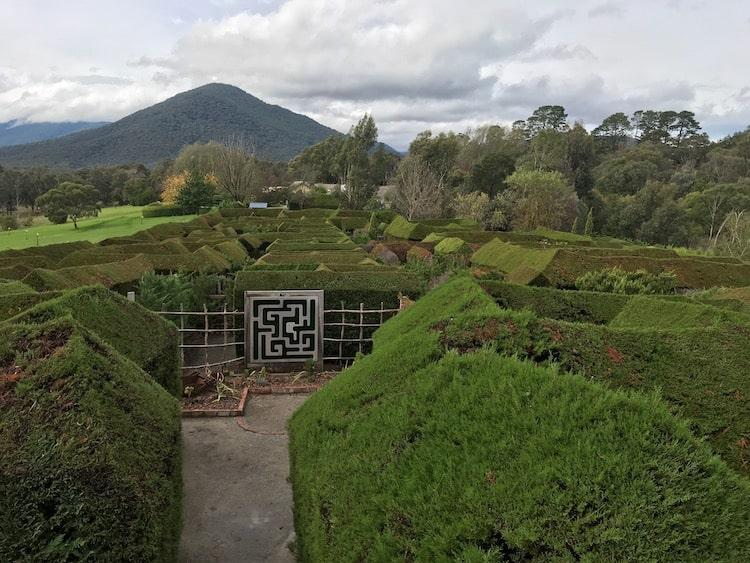 What to do in Healesville - Hedgend Maze