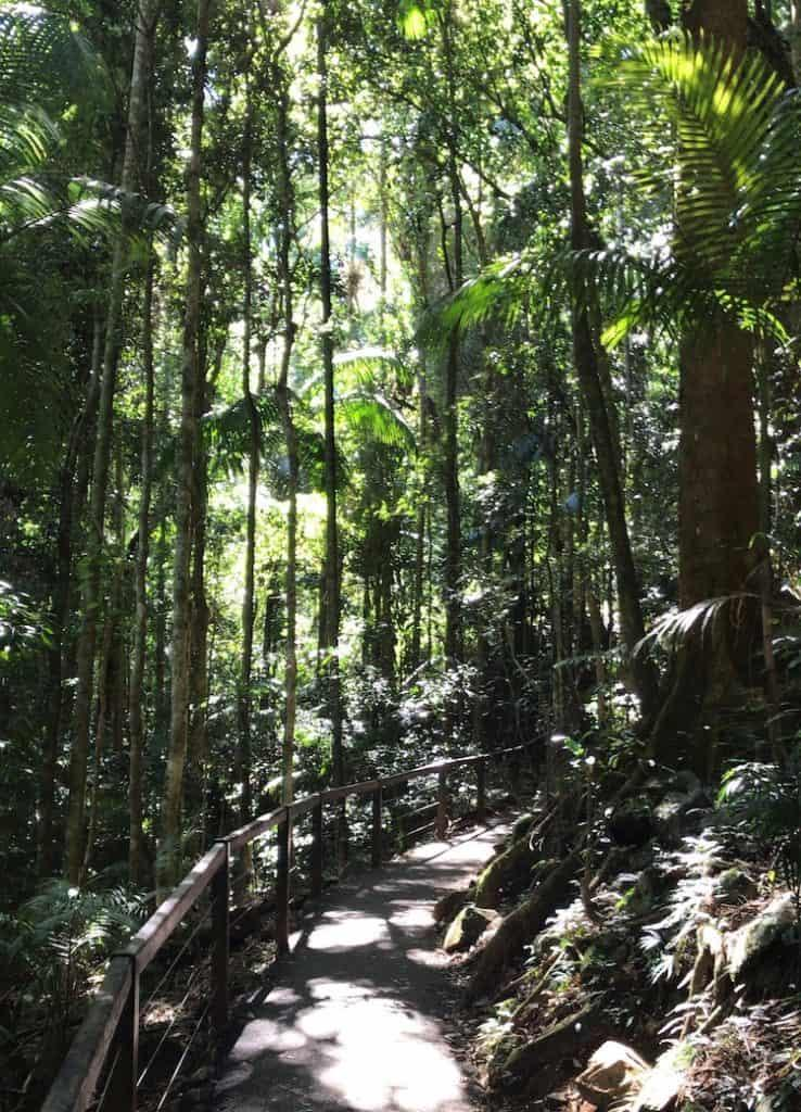 The rainforest around Natural Bridge in Springbrook National Park