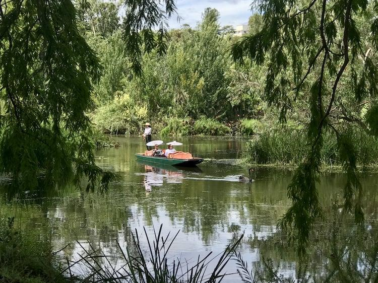 Two people on a green punt with a guide at the back controlling them. A black swan is in the front of the frame which is surrounded by lush, green trees