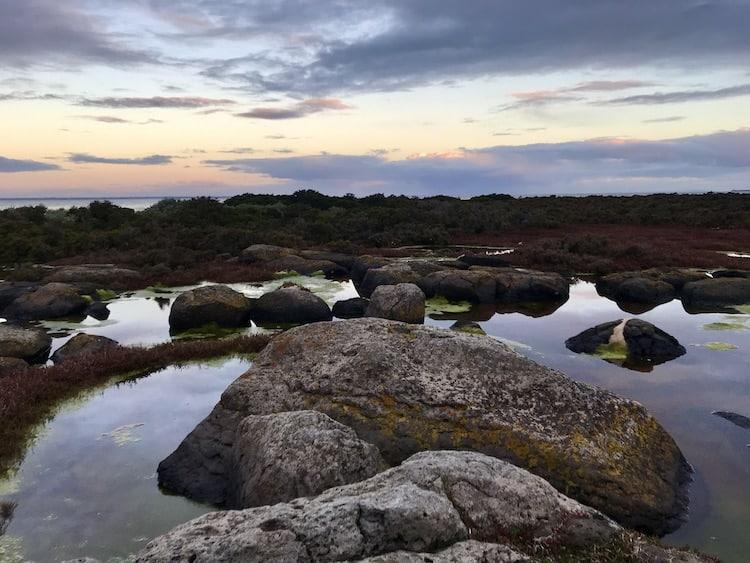 Jawbone Marine Sanctuary: The Best Place to Visit in Williamstown?