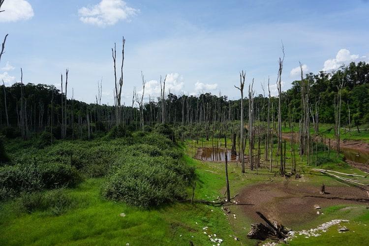 Dead Trees Near Nam Theun Dam