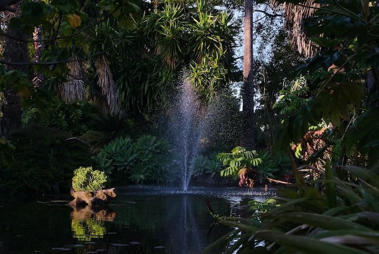 Lake At Williamstown Botanic Gardens