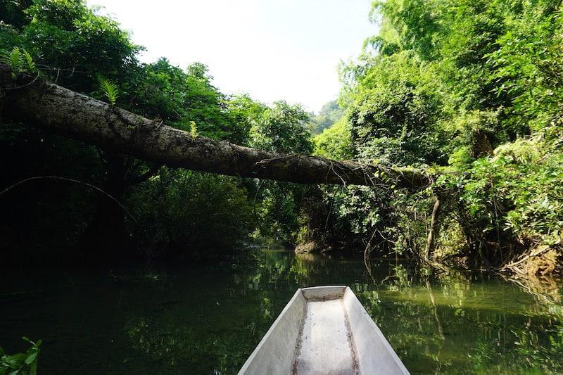 Tree Over Canoe In Laos
