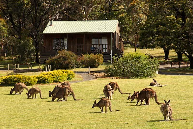 Daltons Resort In Halls Gap In The Grampians Photo By Full Suitcase