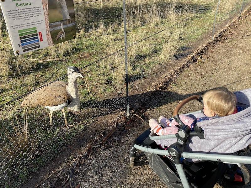 australian bustard and child at serendip sanctuary
