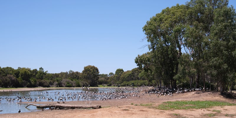 north arm at serendip sanctuary with waterbirds