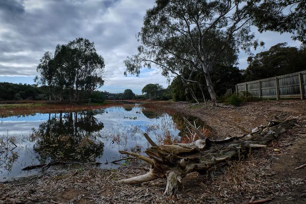 the dam at serendip sanctuary