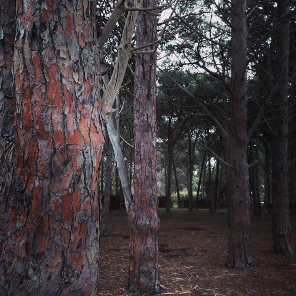 trees at serendip sanctuary