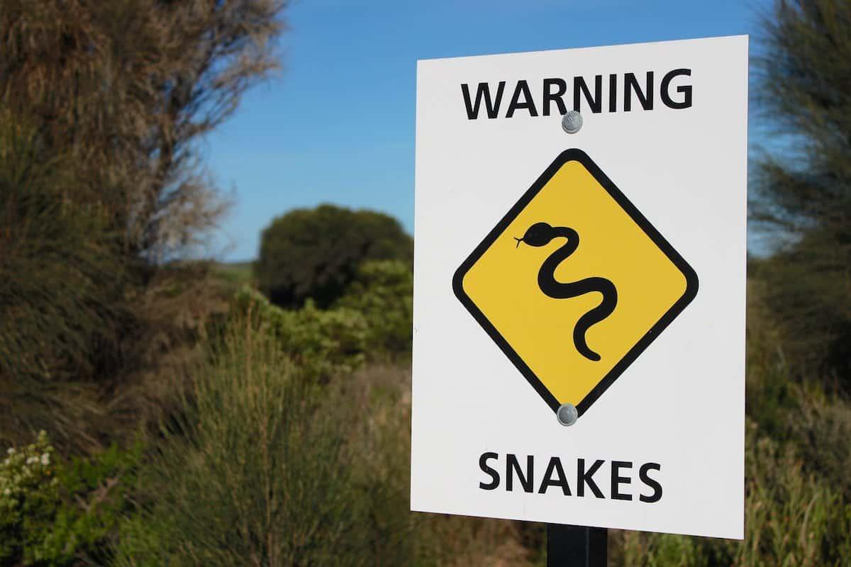 are there snakes in melbourne